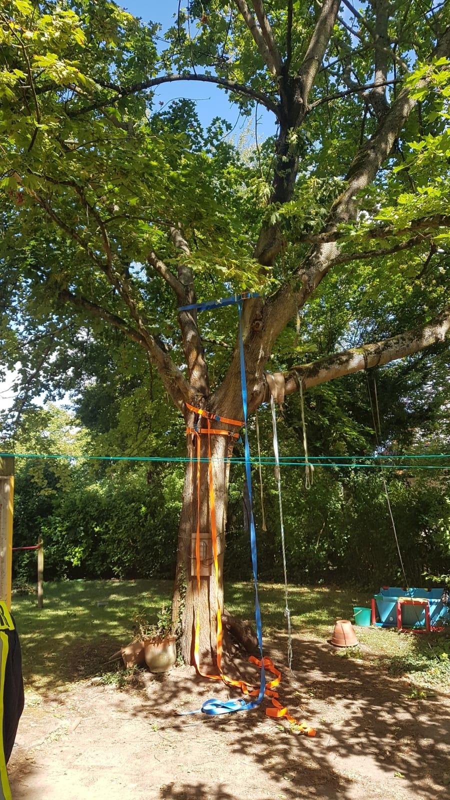 H1 Baum droht umzustürzen 01 2018-08-11