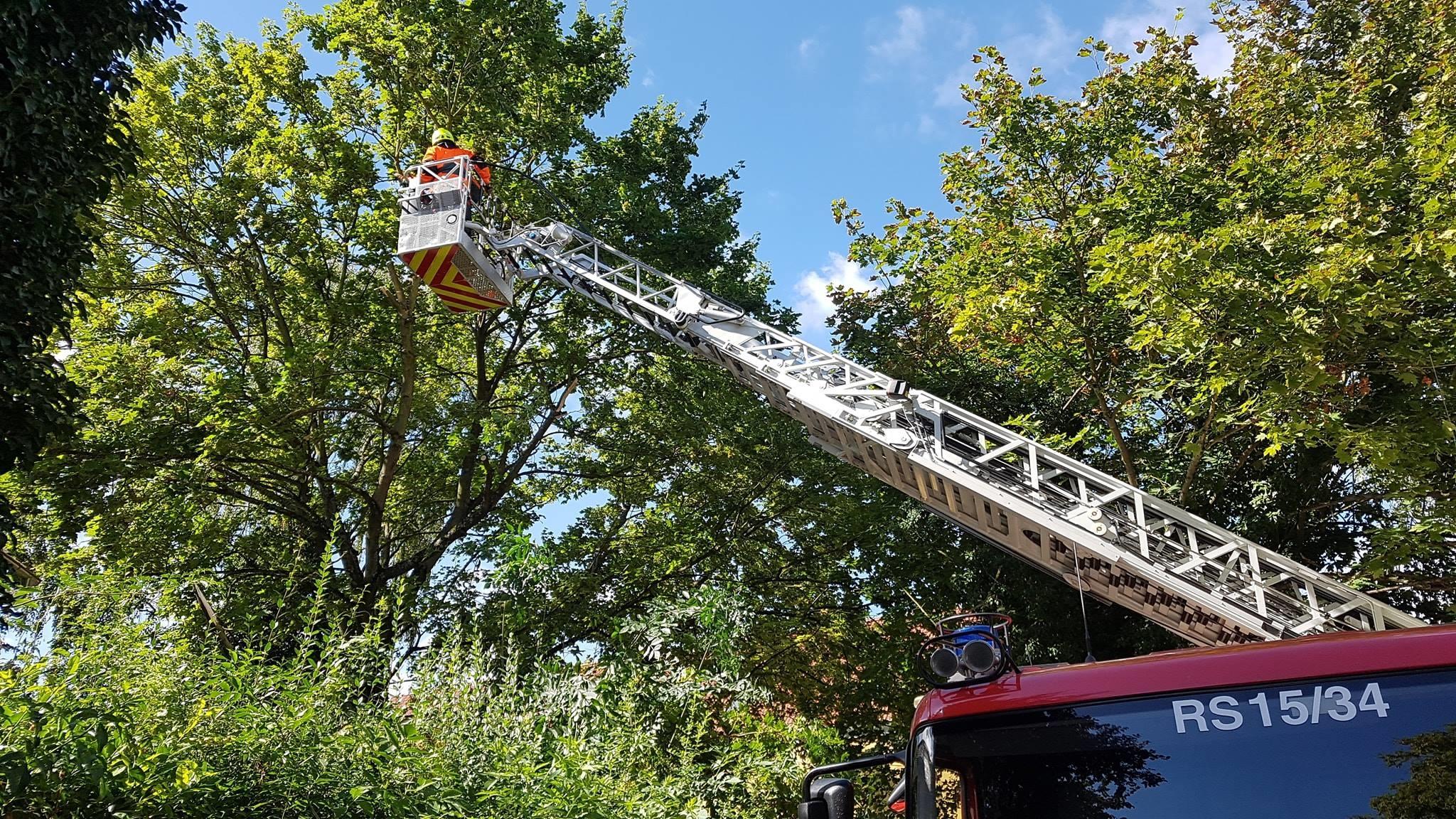 H1 Baum droht umzustürzen 13 2018-08-11