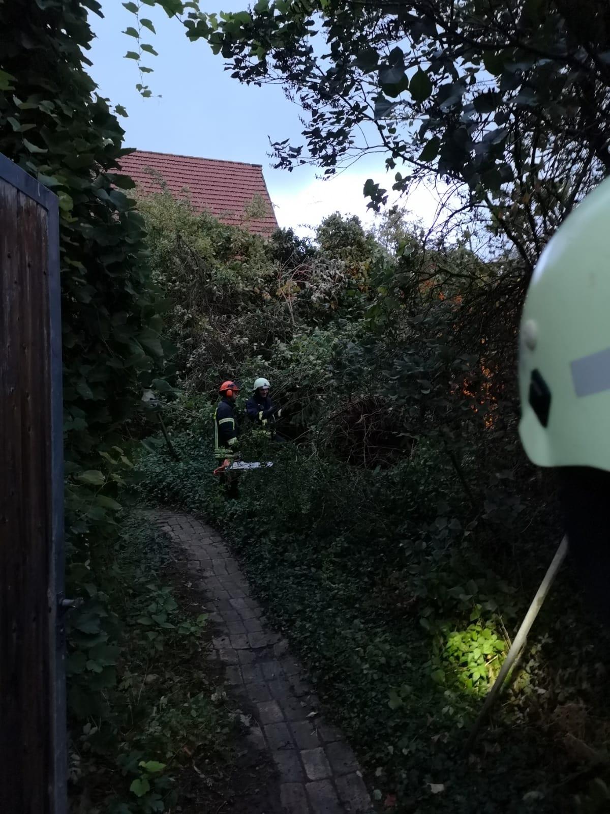 Baum Gaustraße 04 2018-09-26