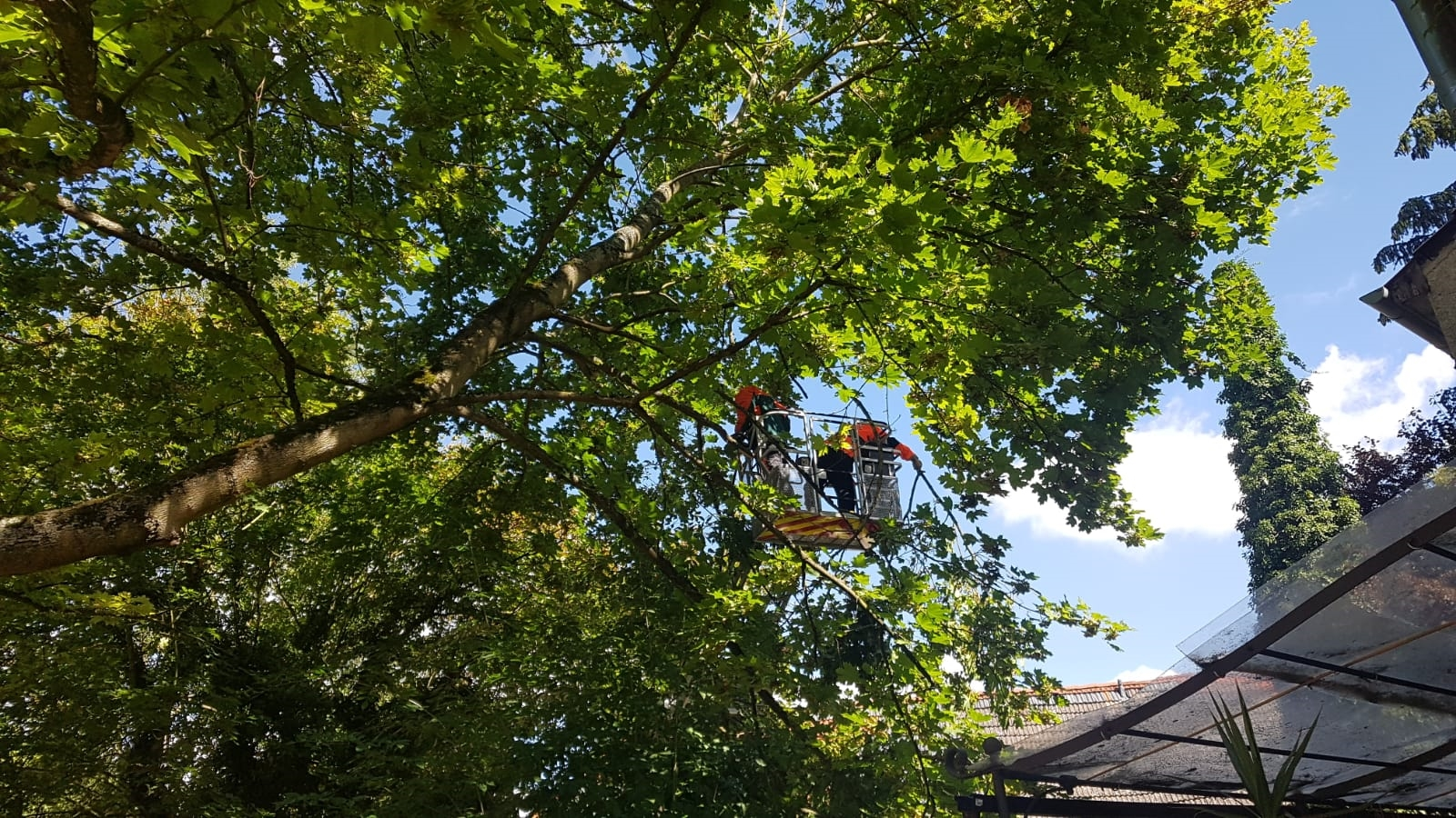 H1 Baum droht umzustürzen 02 2018-08-11