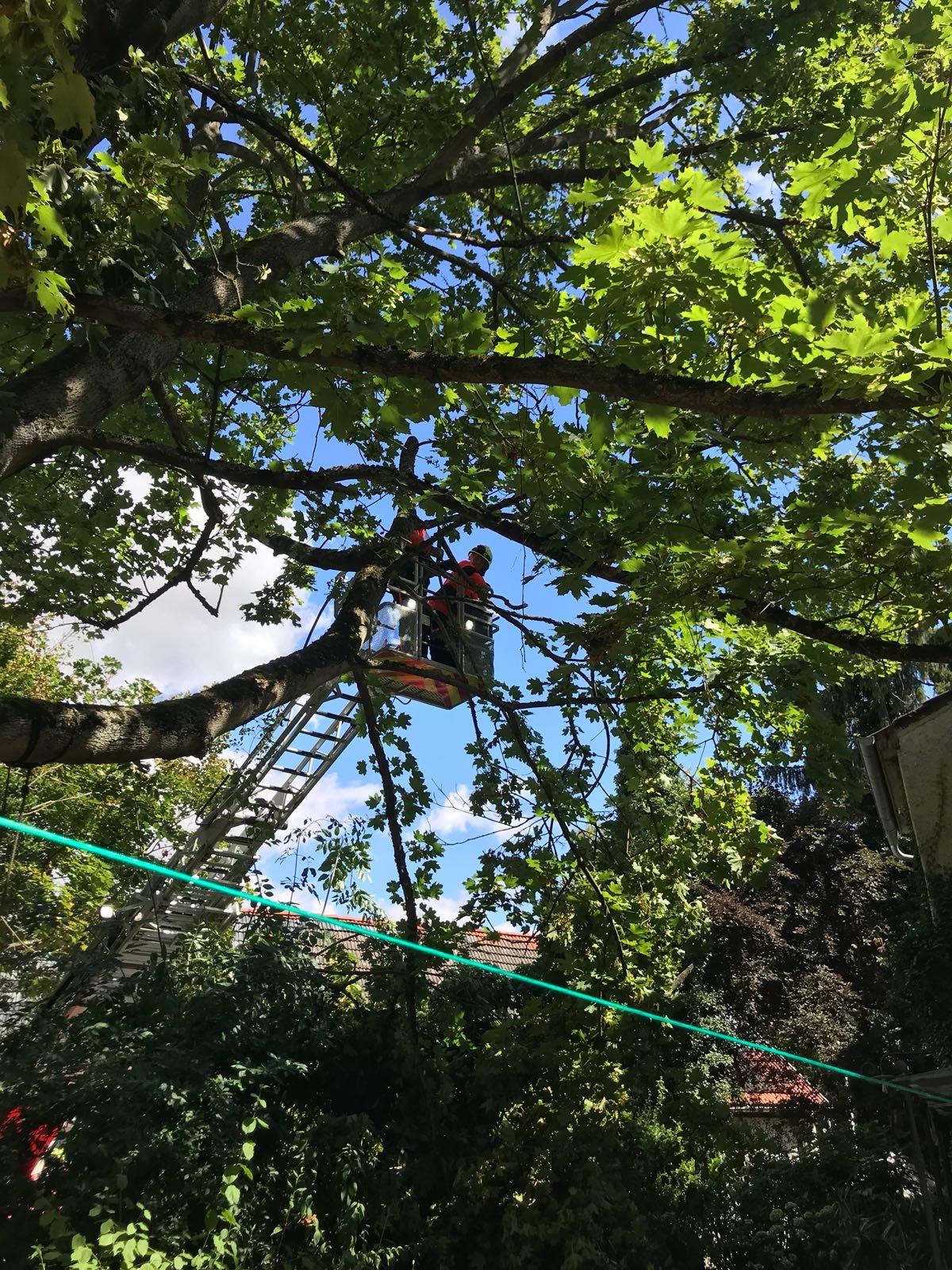 H1 Baum droht umzustürzen 07 2018-08-11