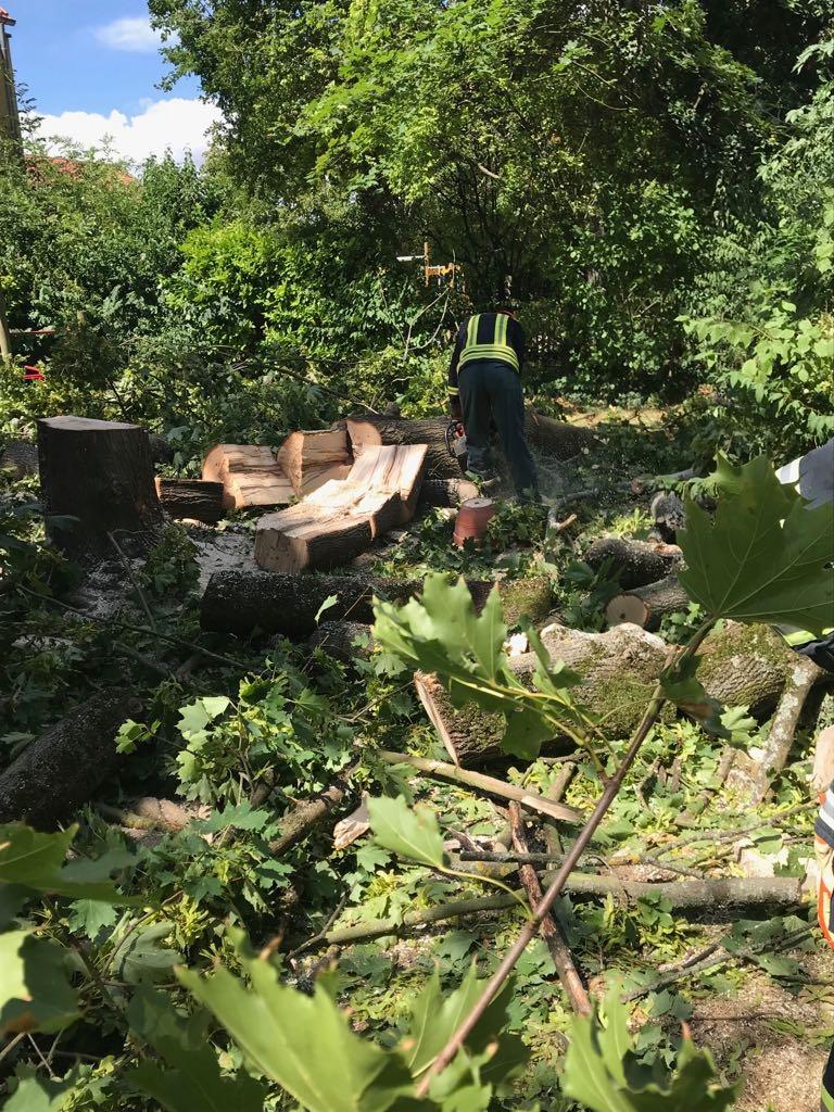 H1 Baum droht umzustürzen 09 2018-08-11