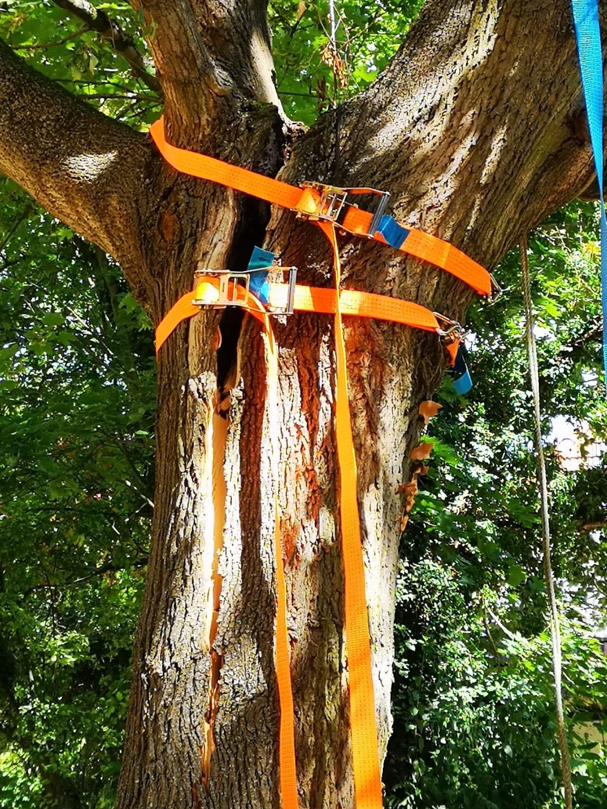 H1 Baum droht umzustürzen 10 2018-08-11