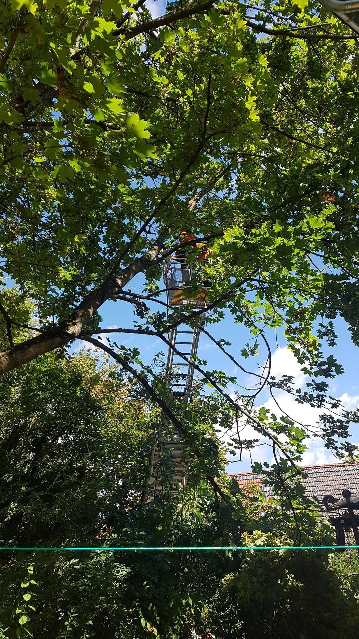 H1 Baum droht umzustürzen 18 2018-08-11