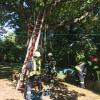 H1 Baum droht umzustürzen 04 2018-08-11