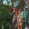 H1 Baum droht umzustürzen 06 2018-08-11