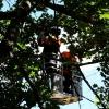 H1 Baum droht umzustürzen 11 2018-08-11