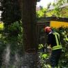 H1 Baum droht umzustürzen 12 2018-08-11